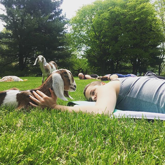 THANK YOU for helping us stretch and reach our CentreGives goal! We are grateful for your incredible show of support - and happy to have been able to introduce so many new faces to this magical place we love so much. In gratitude 🙌❤️🐐🌳 #centregives #lovewhereyoulive #centralpa #goatyoga #pennsvalley #statecollege