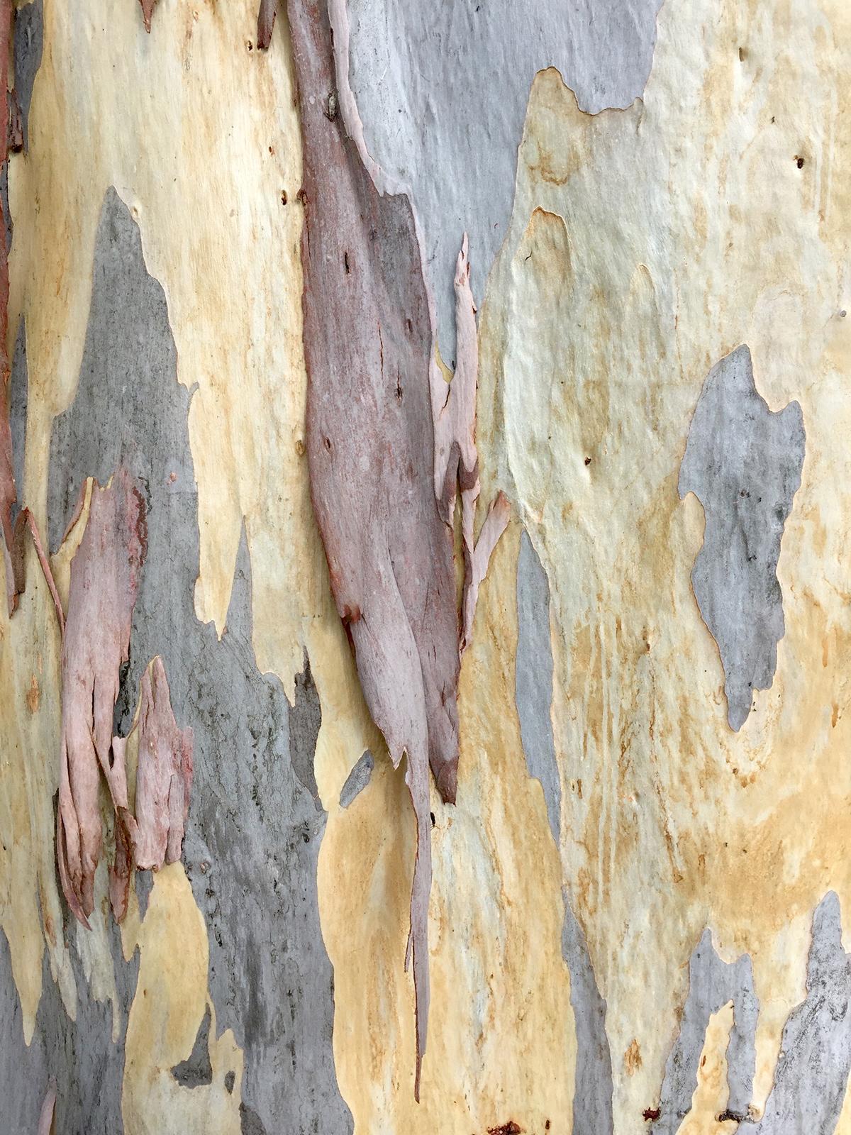 gum-tree-bark.jpg