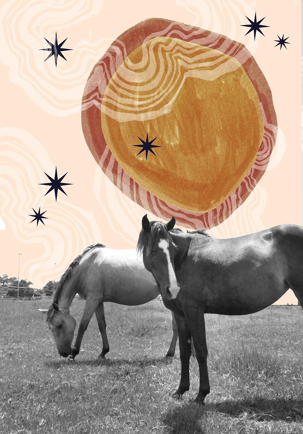 Ponygold-web.jpg