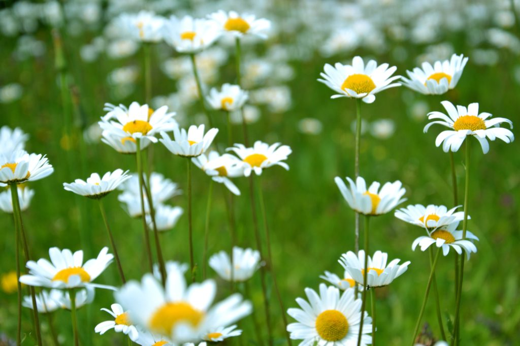 """5 Things You Should Do To Get you Yard Ready for Spring"""""""
