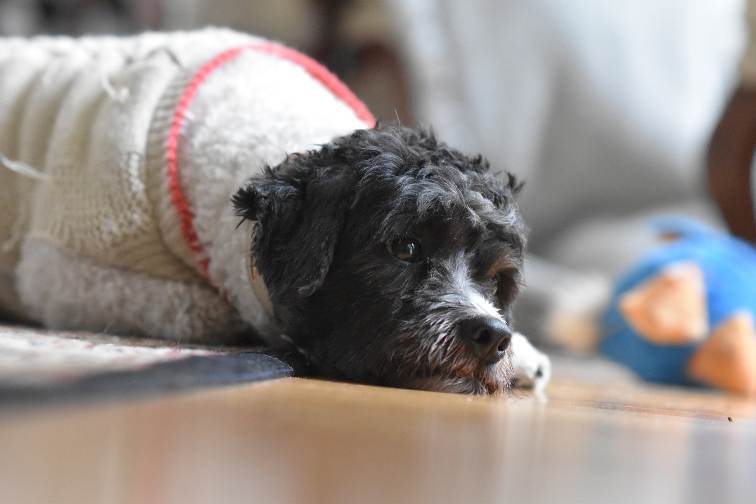 Family_Dog_Portraits_George_and_Milo_originals-11.JPG