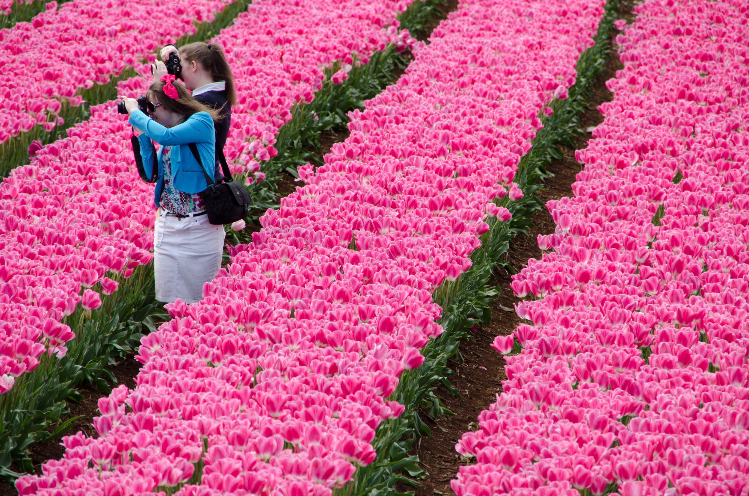 tulip fest 14October 11, 2014-4.jpg