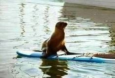 Actual picture of me trying to paddle board in Jamaica ;-)