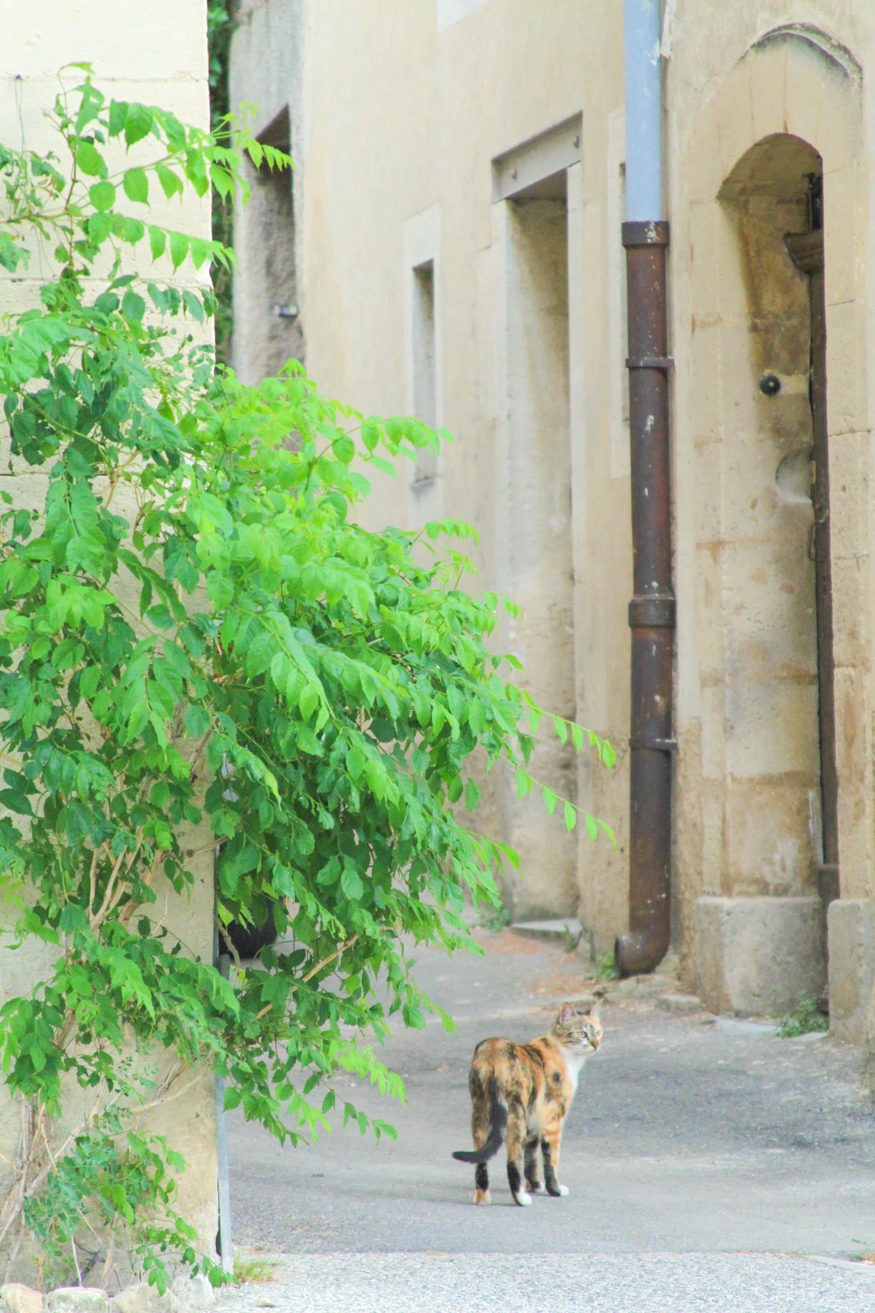 Lourmarin, France | #mfrancisdesigntravels
