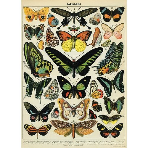 Vintage Butterflies Print on The Weekly Edit