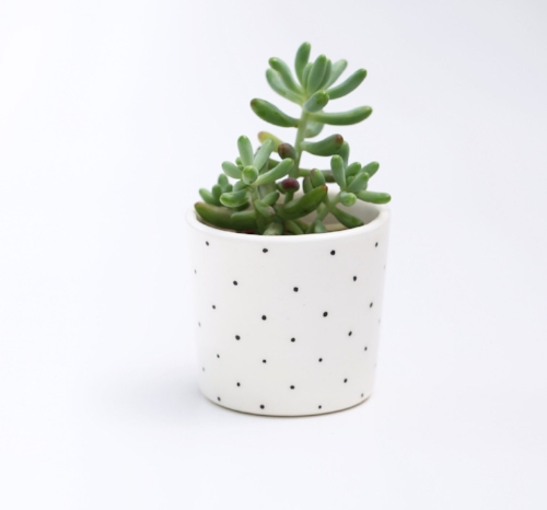 Spotted Planter on the Weekly Edit
