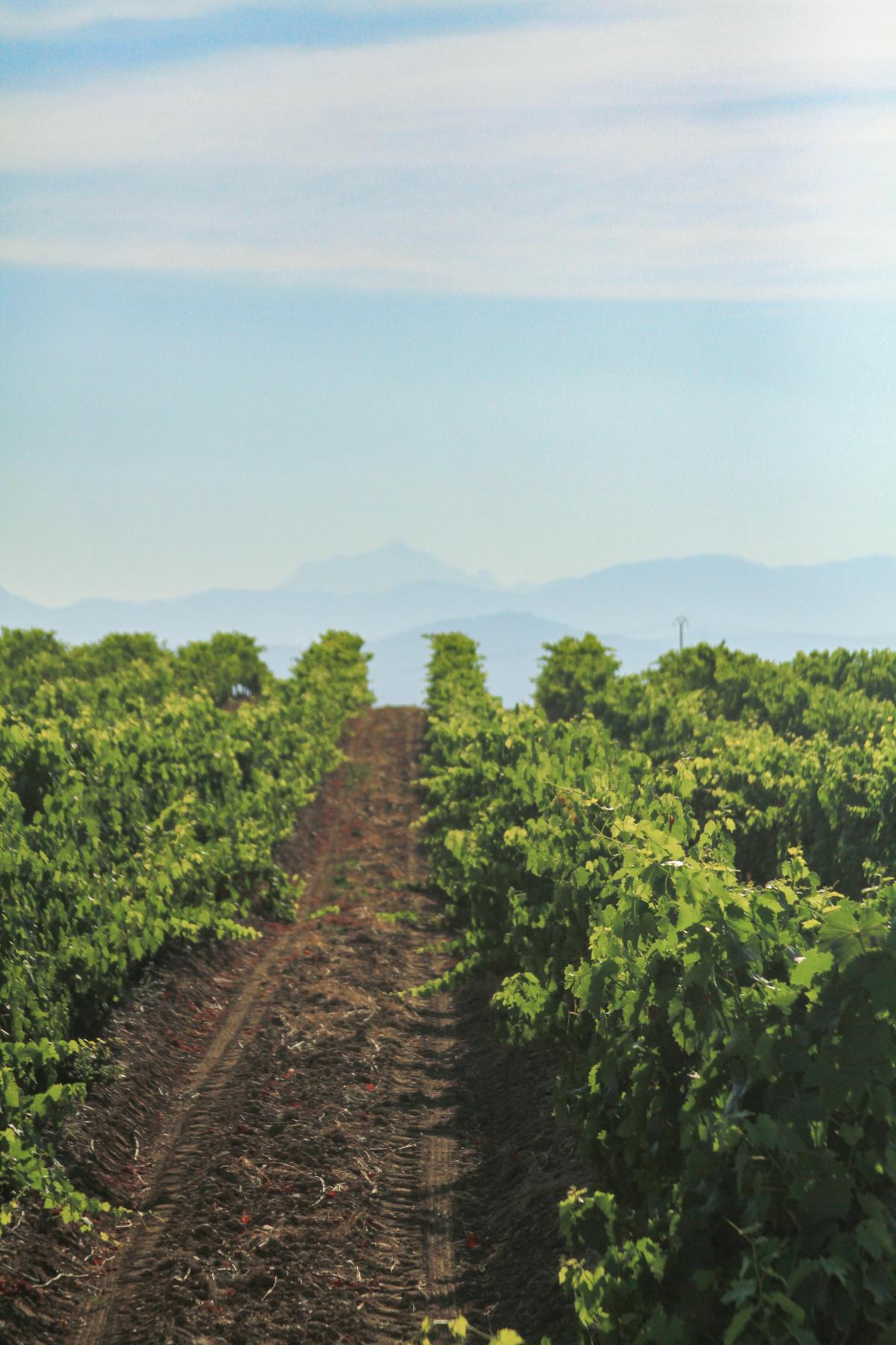 Corsica-travel-guide-6.jpg