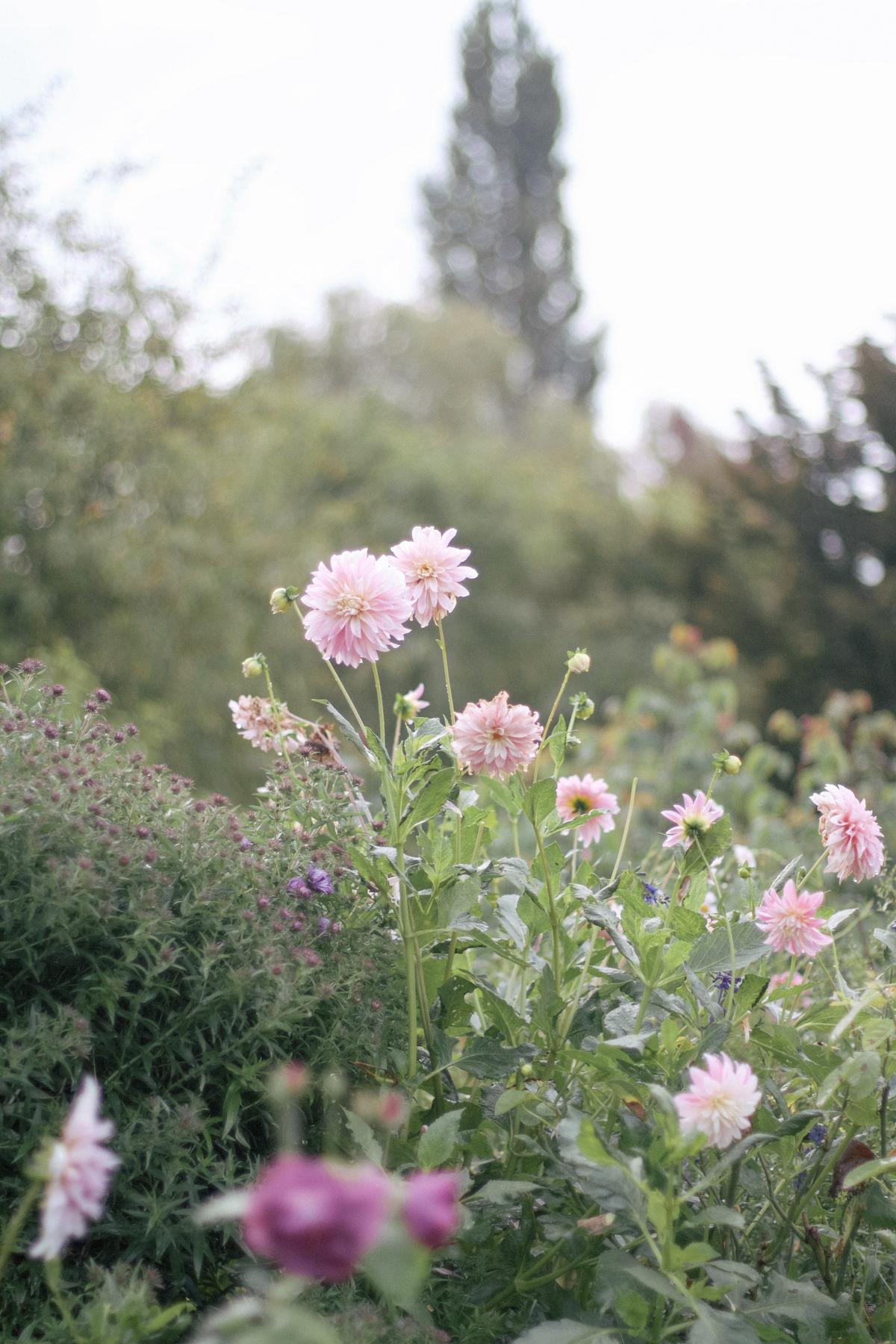 Giverny-4.jpg