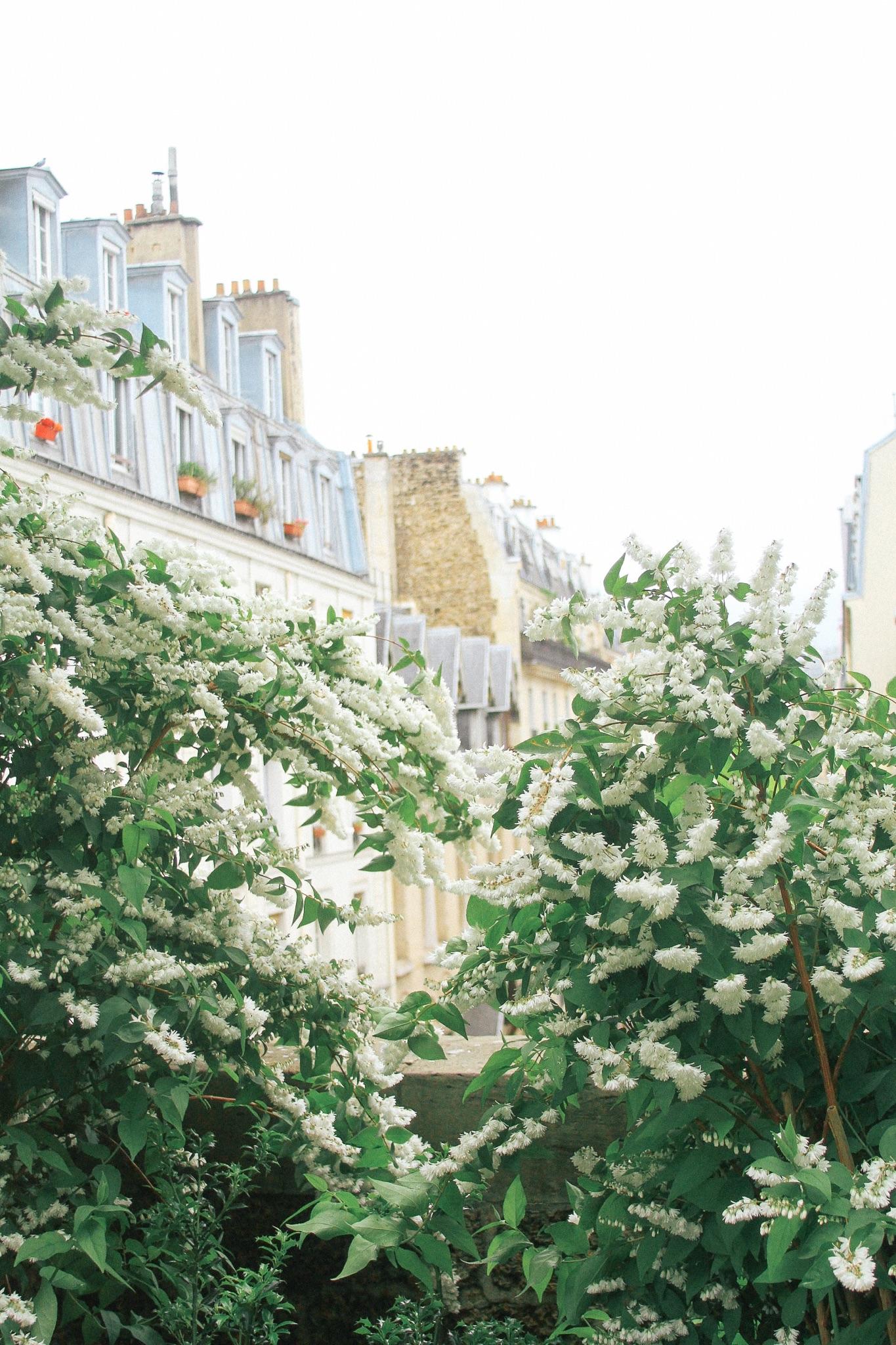Paris-Walking-Guide-MonicaFrancis-9.jpeg