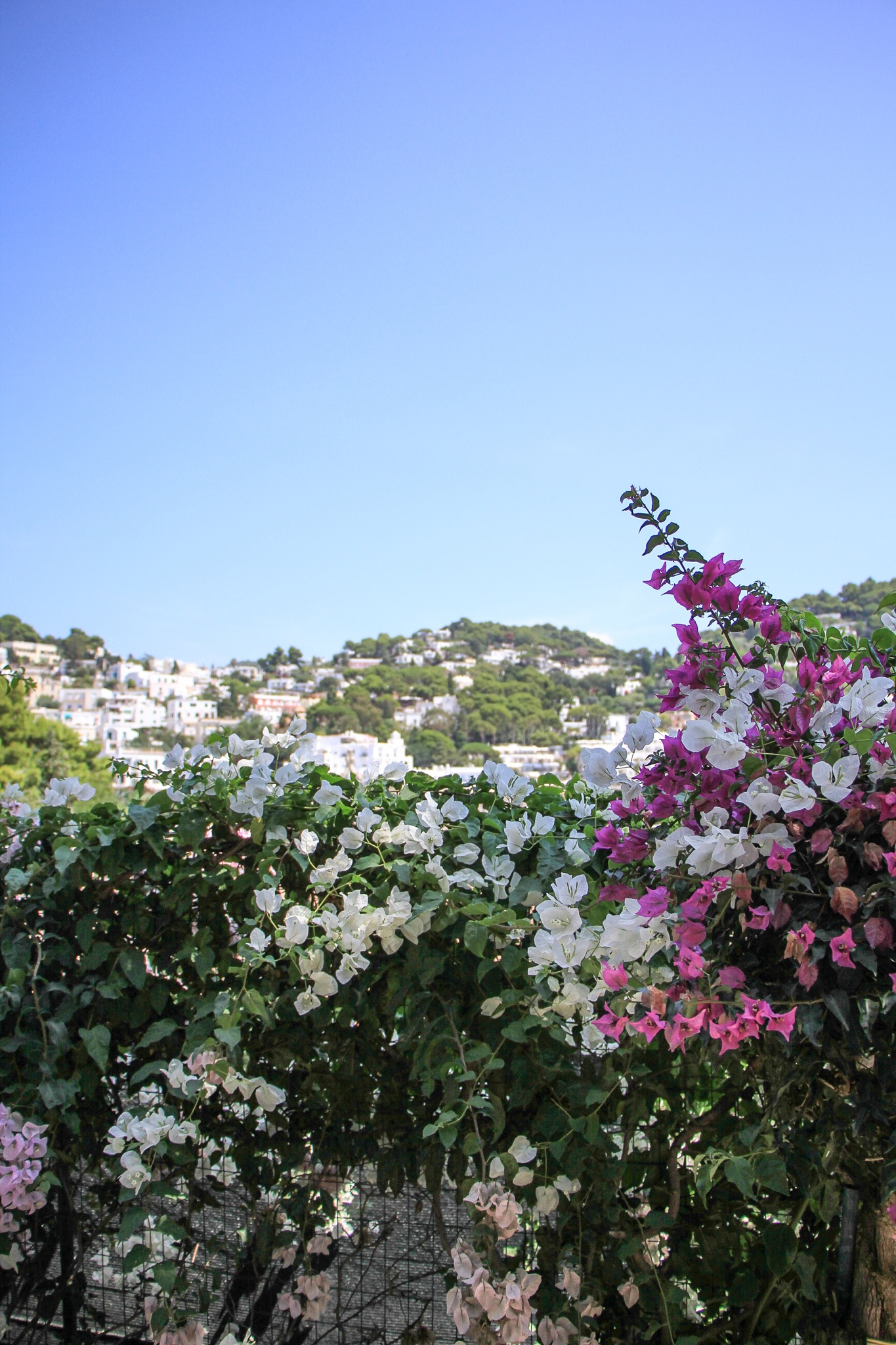 Capri Travel Guide | Monica Francis #mfrancisdesigntravels