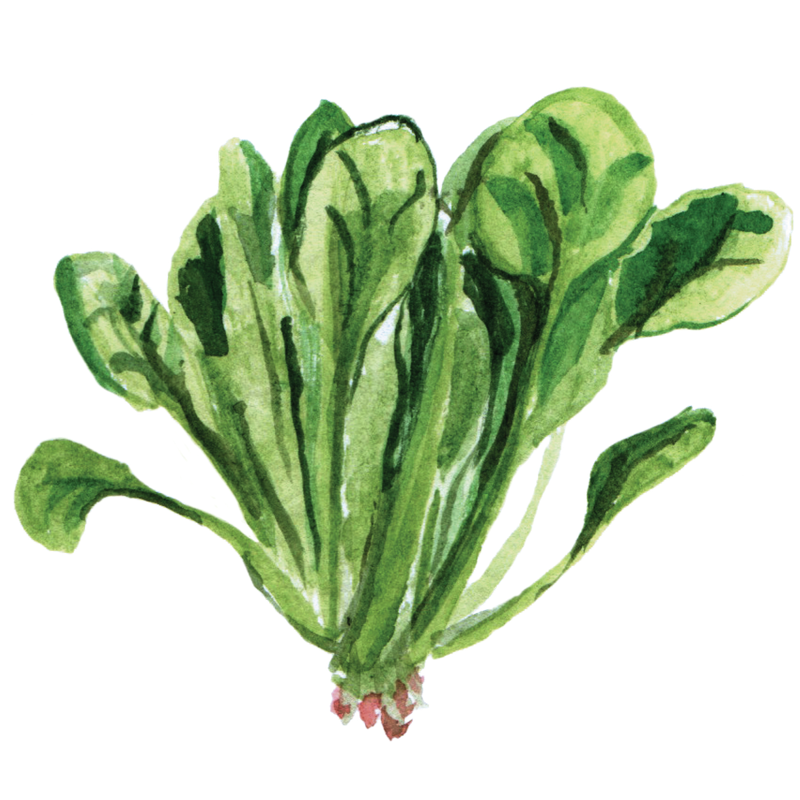 spinach painting.png