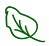 espinache leaf