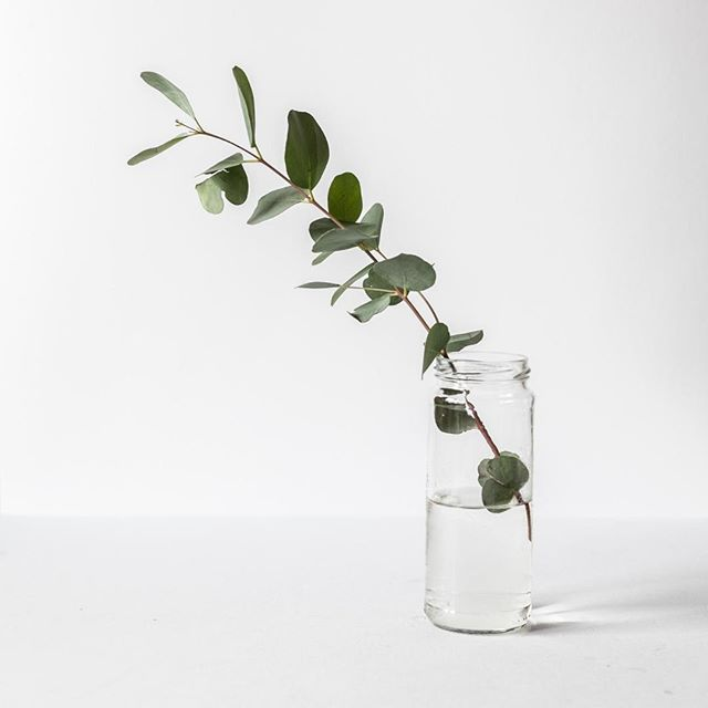 To breath easy: Place a jar of fresh eucalyptus somewhere in your shower as close as possible to your shower head (but not directly under the running water). The steam will lift and release some of the eucalyptus plant's essential oils which helps with relaxation and detox. ⠀ ⠀ #eucalyptus #essentialoils #shower #beautyhack #destress #relax #eucalytusessentialoil #eucalyptuseo #breatheasy #lifehacks #espinache #whyspinach