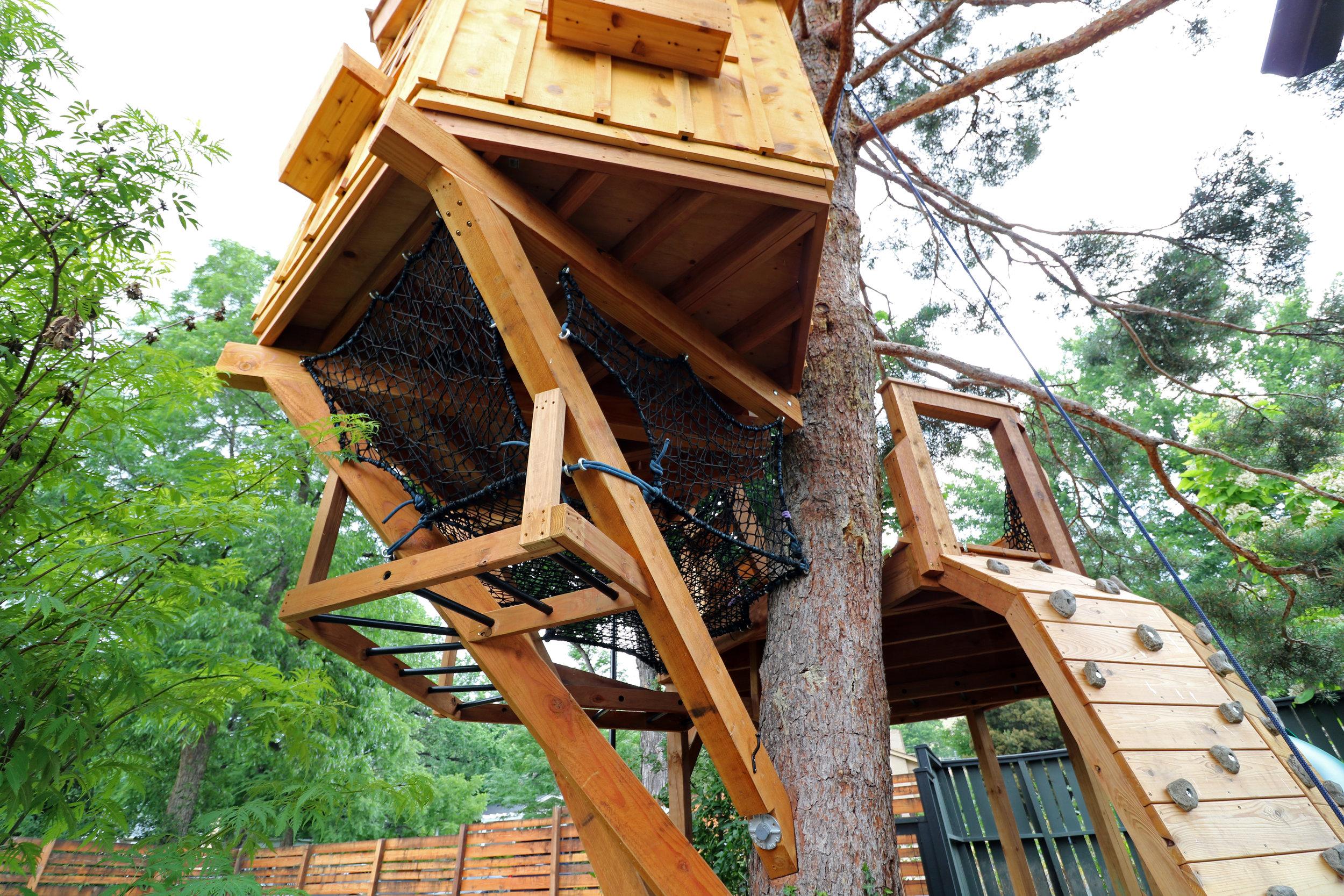 Scots Pine 22.JPG