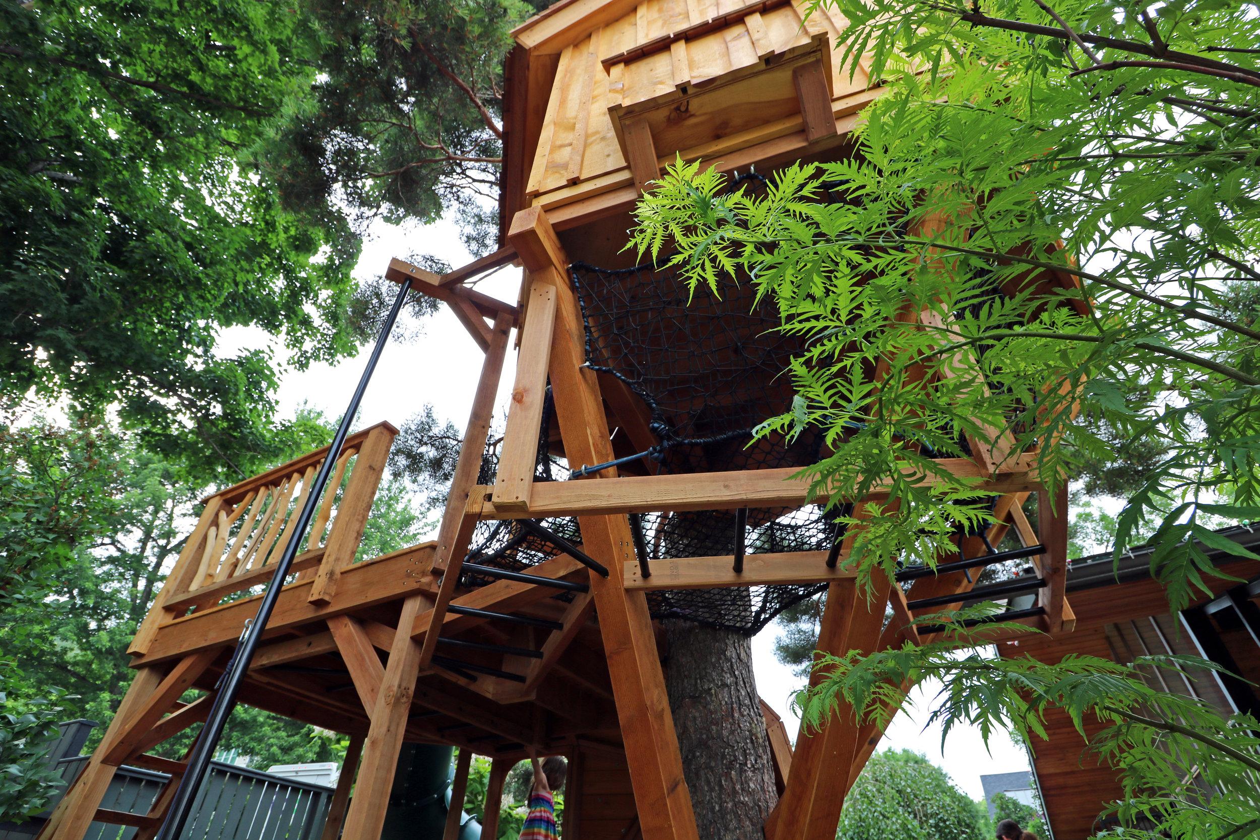 Scots Pine 23.JPG