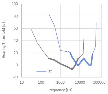Rat Hearing Threshold