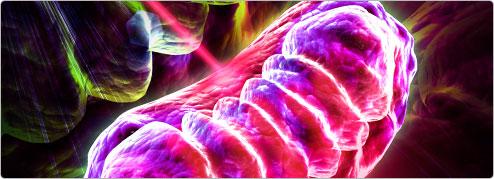 mitochondria-image.jpg