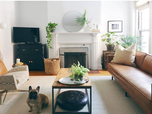 Plants-Mid-Century-Living-Room-2.png
