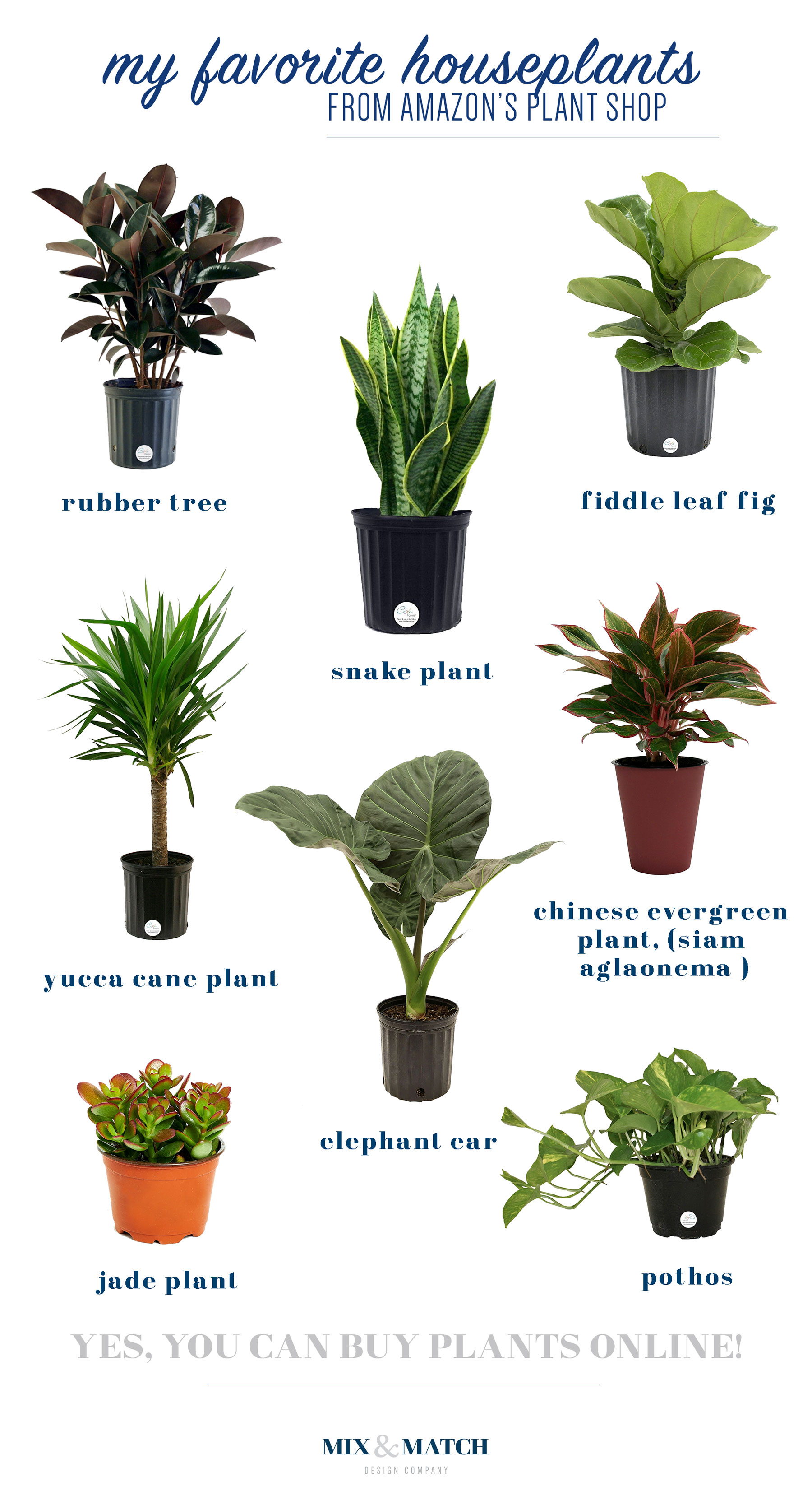 Did you know you can buy indoor plants online? Amazon has a new houseplant shop and these are some of my favorites. Many of these are easy to care for (like the pothos and snake plant!) and will add so much life to the decor in your home!