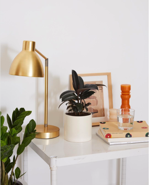 Decorate your home with plants! The Sill is one of my new favorite online sources for plants if you don't have a good local spot. If you need a modern planter for your new green friend, be sure to check out my roundup of planters on the blog!