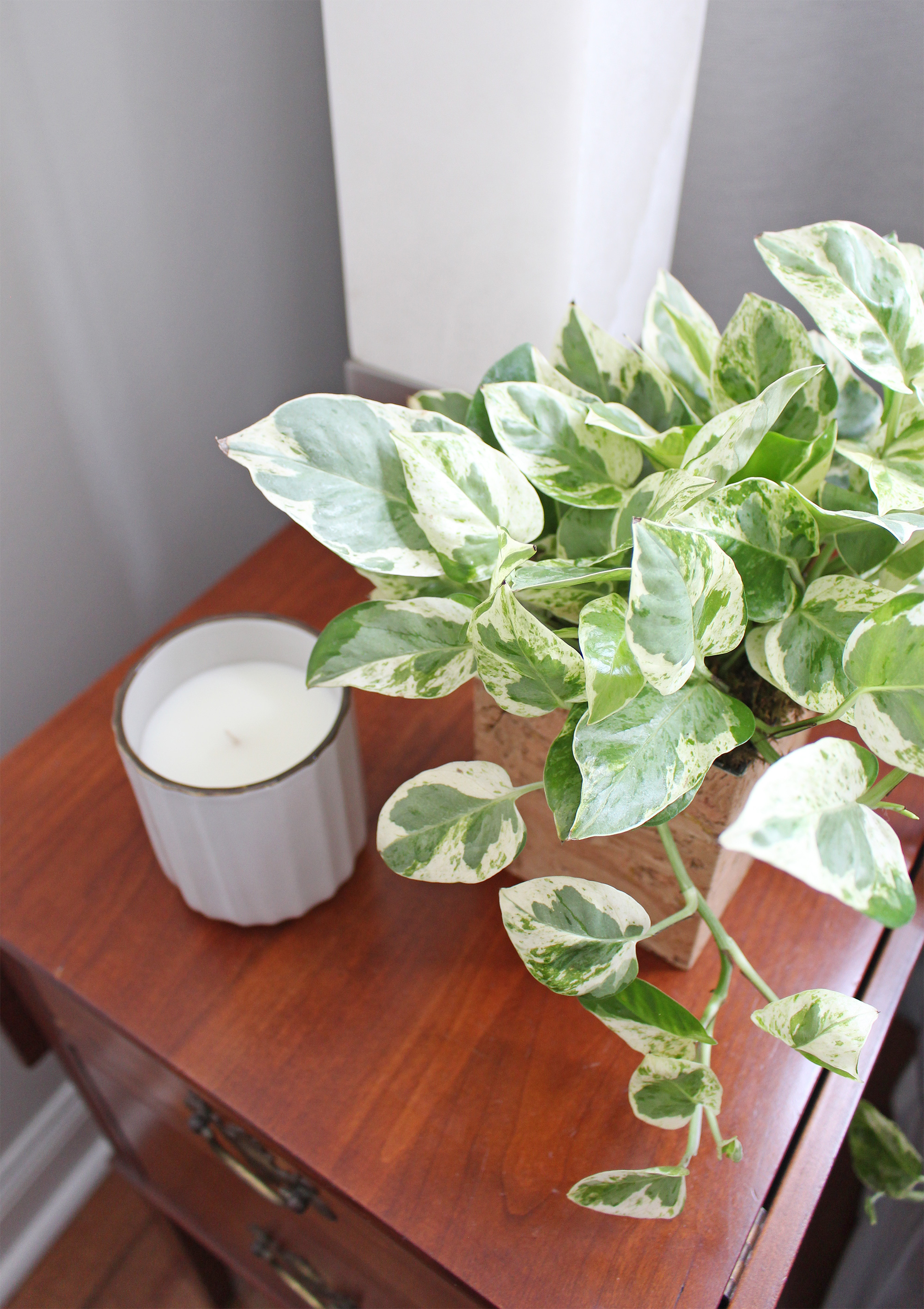 Pearls and Jade Pothos. Check out this blog post devoted to all-things indoor plants, my favorite easy-care houseplants, and where to find planters and pots for them.