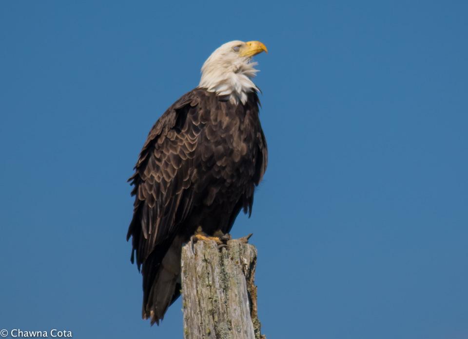 Bald Eagle Meditation Facebook-4.jpg