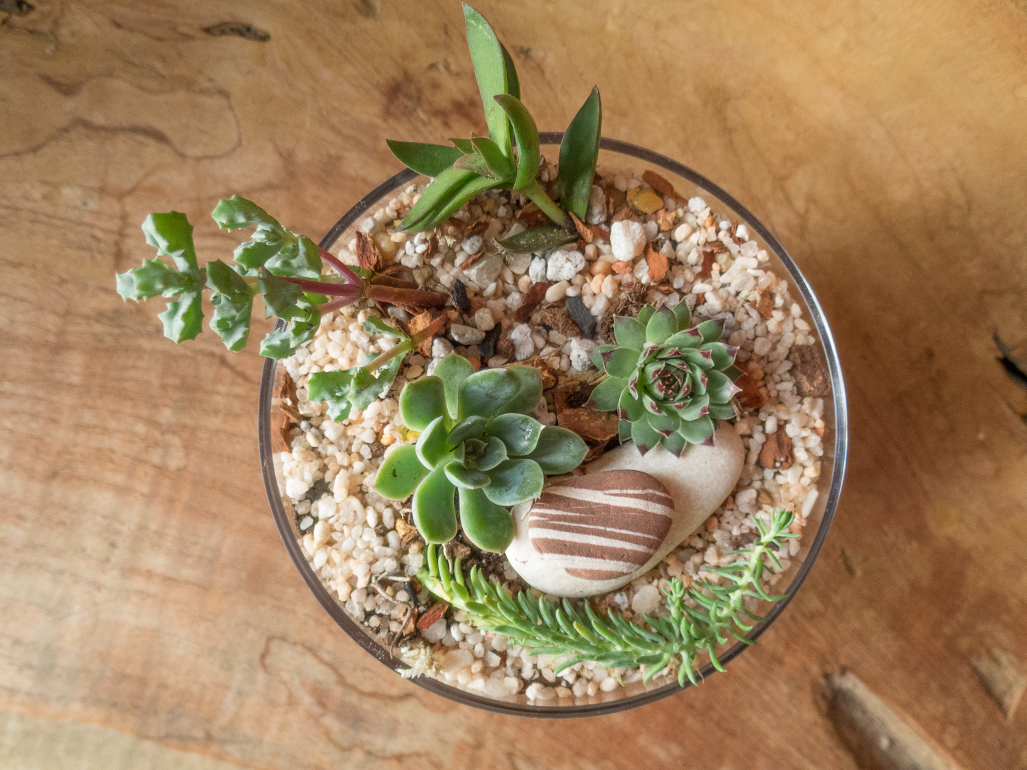 Terrariums Pebble and Branch Floral-14.jpg