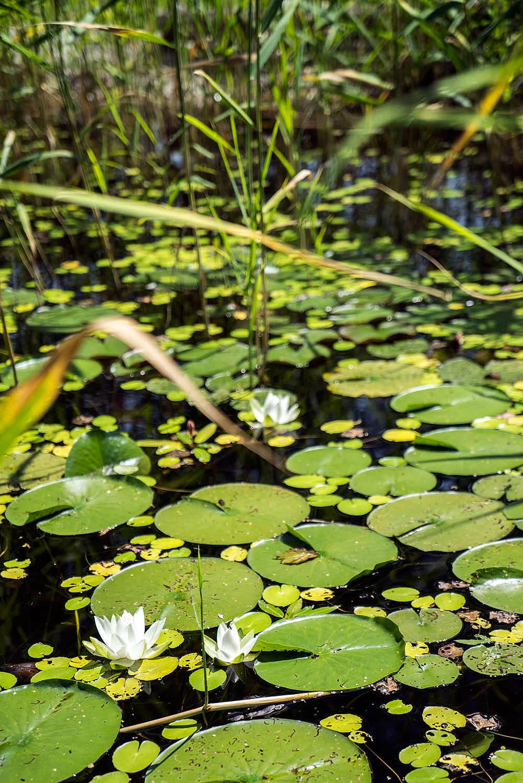 Epp-Gartenbau-Teich-3-170.jpg