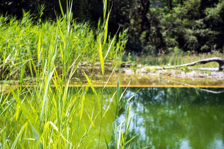 Epp-Gartenbau-Teich-3-185.jpg
