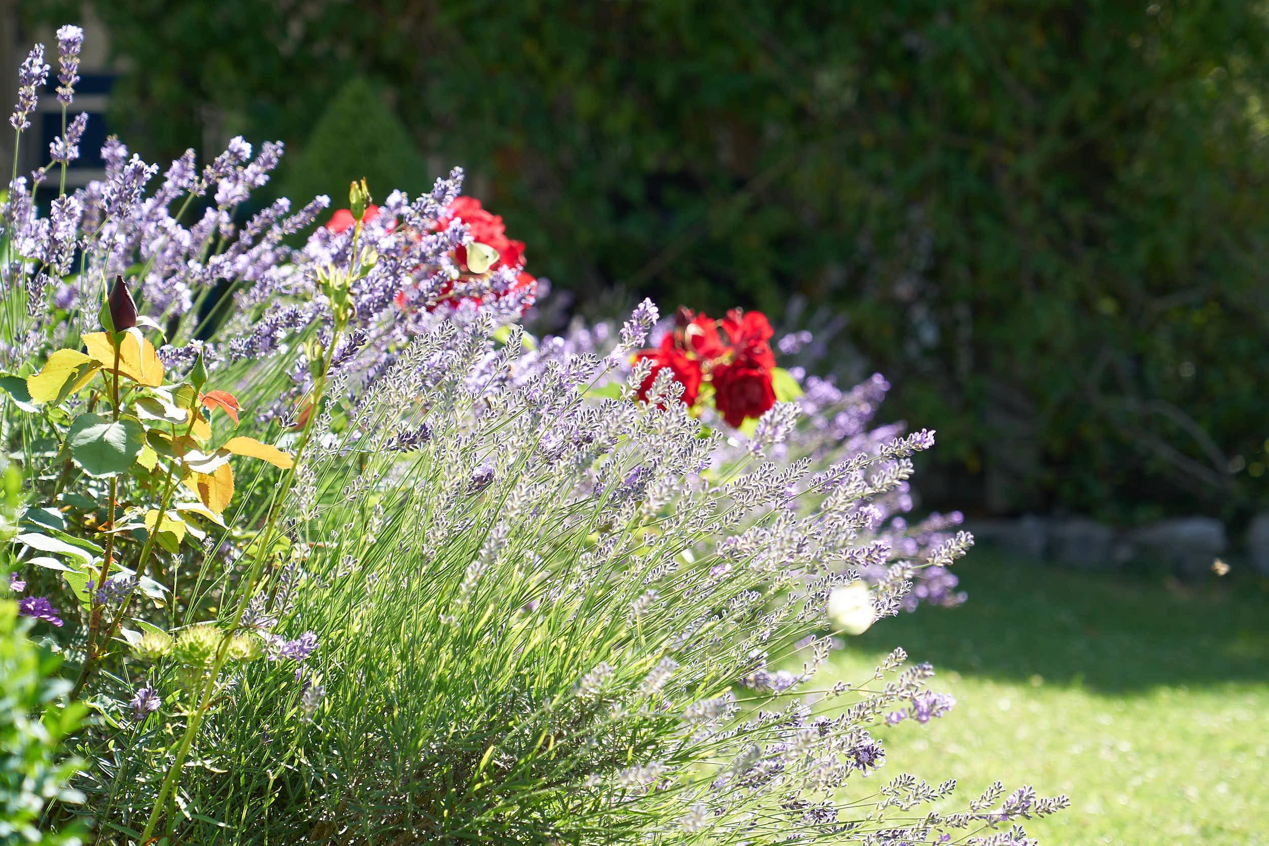 Pflege und Pflanzen im Garten  PFLANZUNGEN   Entdecke die Möglichkeiten