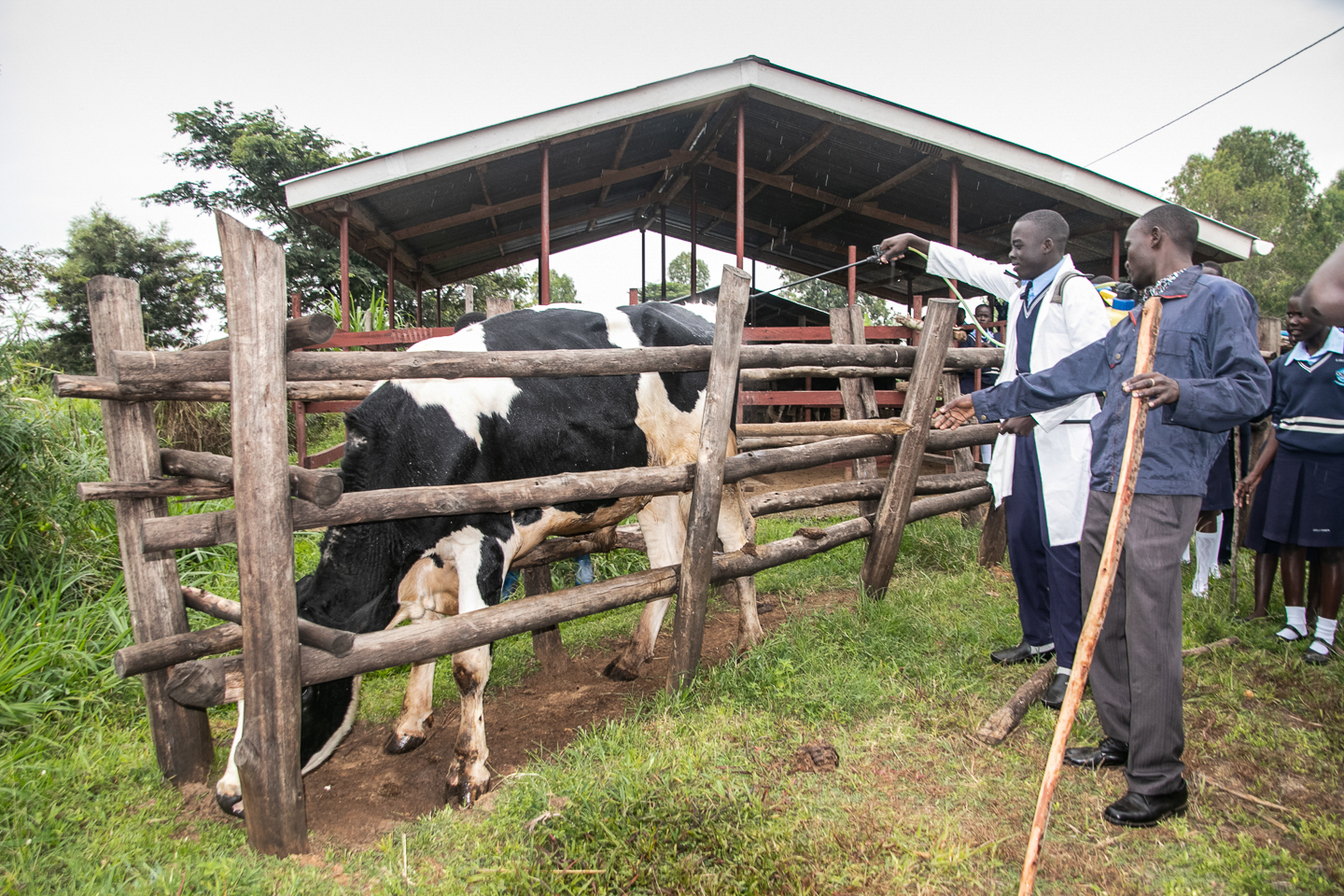 At the Ocer/Campion school farm, Mr. Balikowa shows his student how to spray a cow.