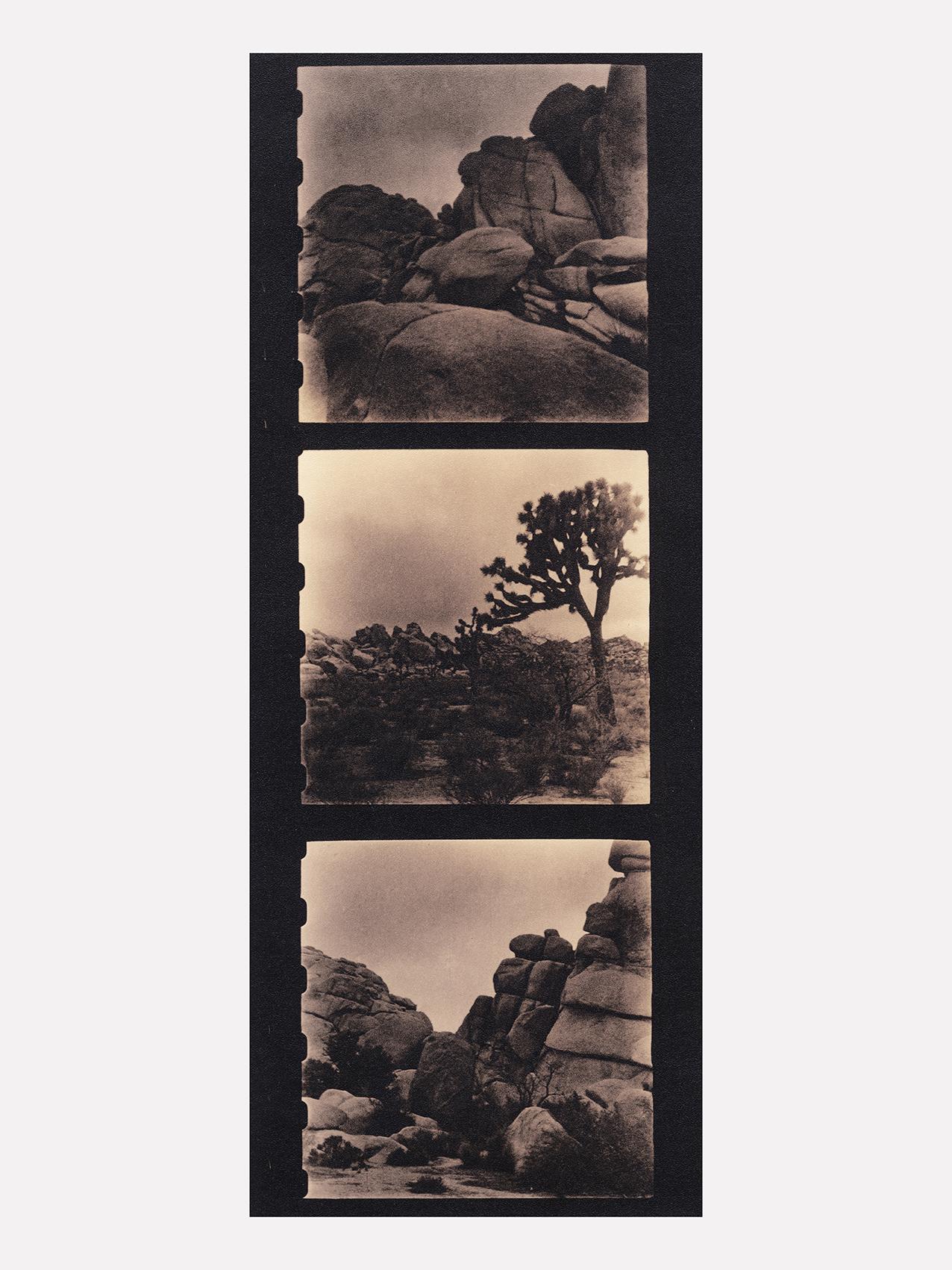 04 Zuili Joshua Tree 2016.jpg