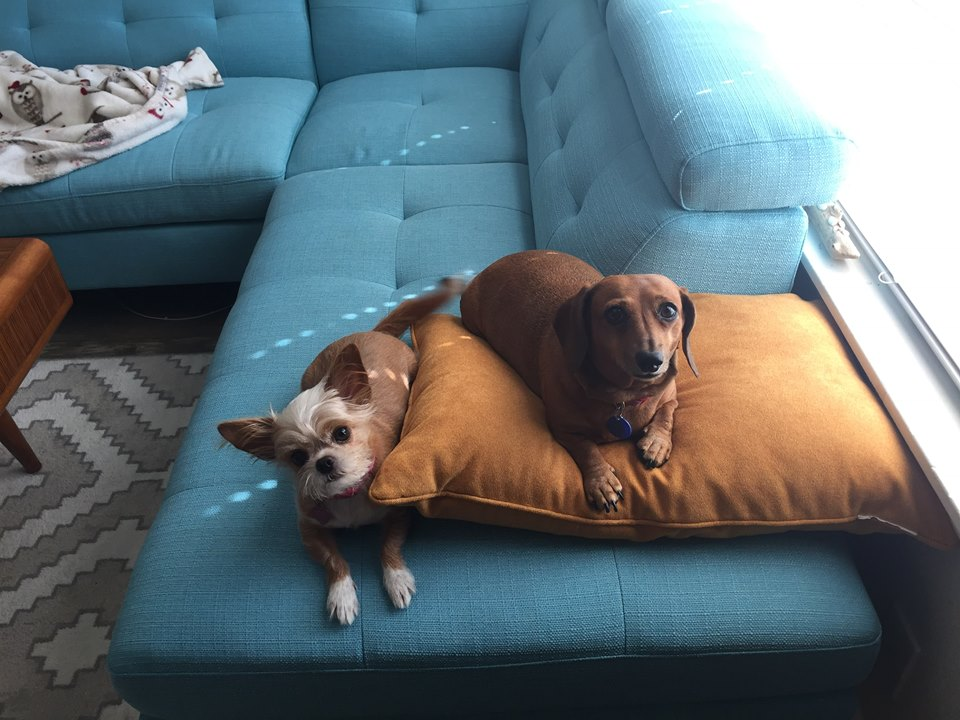 Brisby and Lady want to remind you that RESCUED is the best breed.