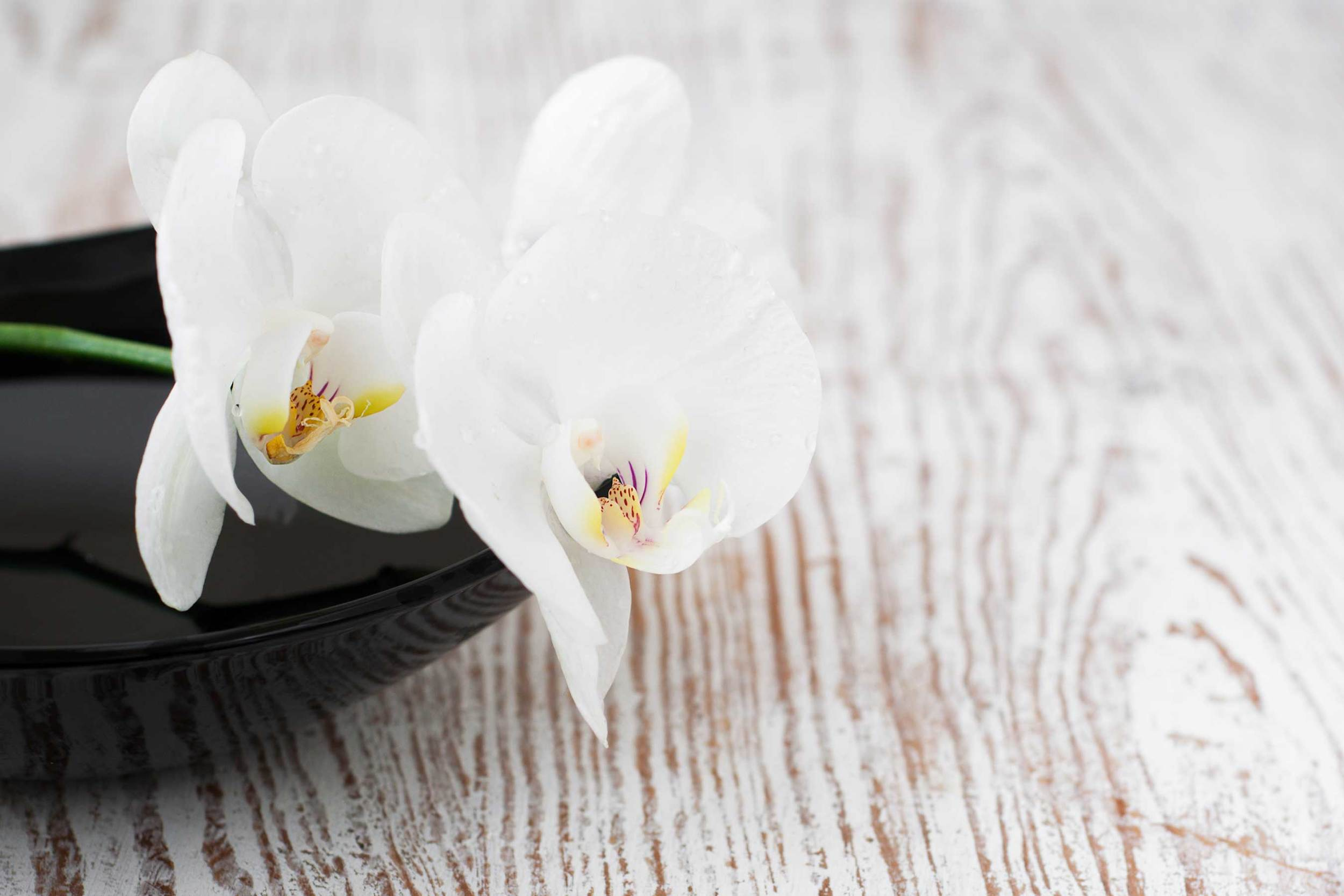 """Copy of <p>PACKAGES<strong>At the Orchid House, we have a collection of packages to help you experience the best of your stay, both at the hotel and in Miami Beach.</strong><a href=""""/packages"""">MORE</a></p>"""