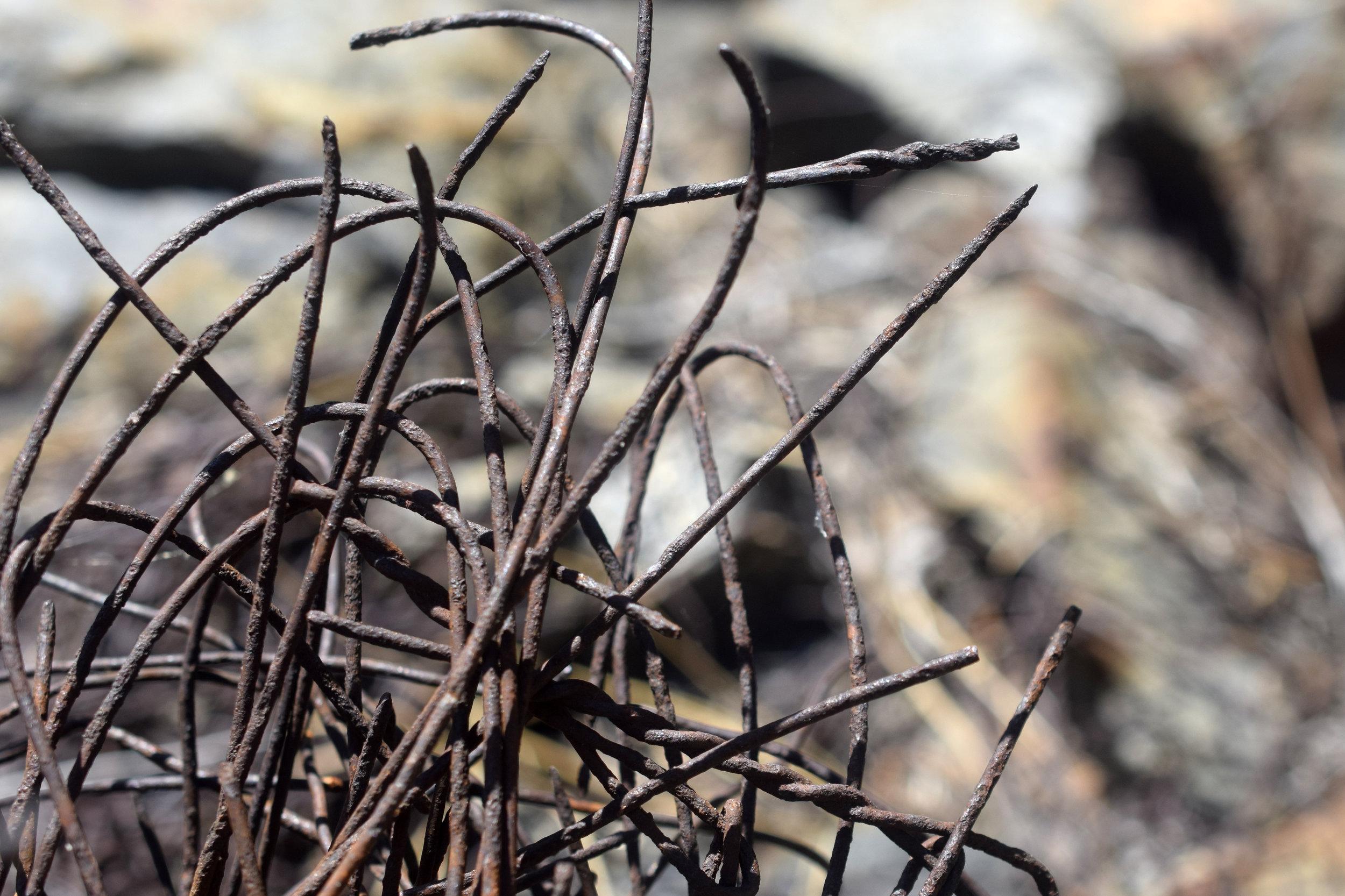 Wire-Weeds.JPG
