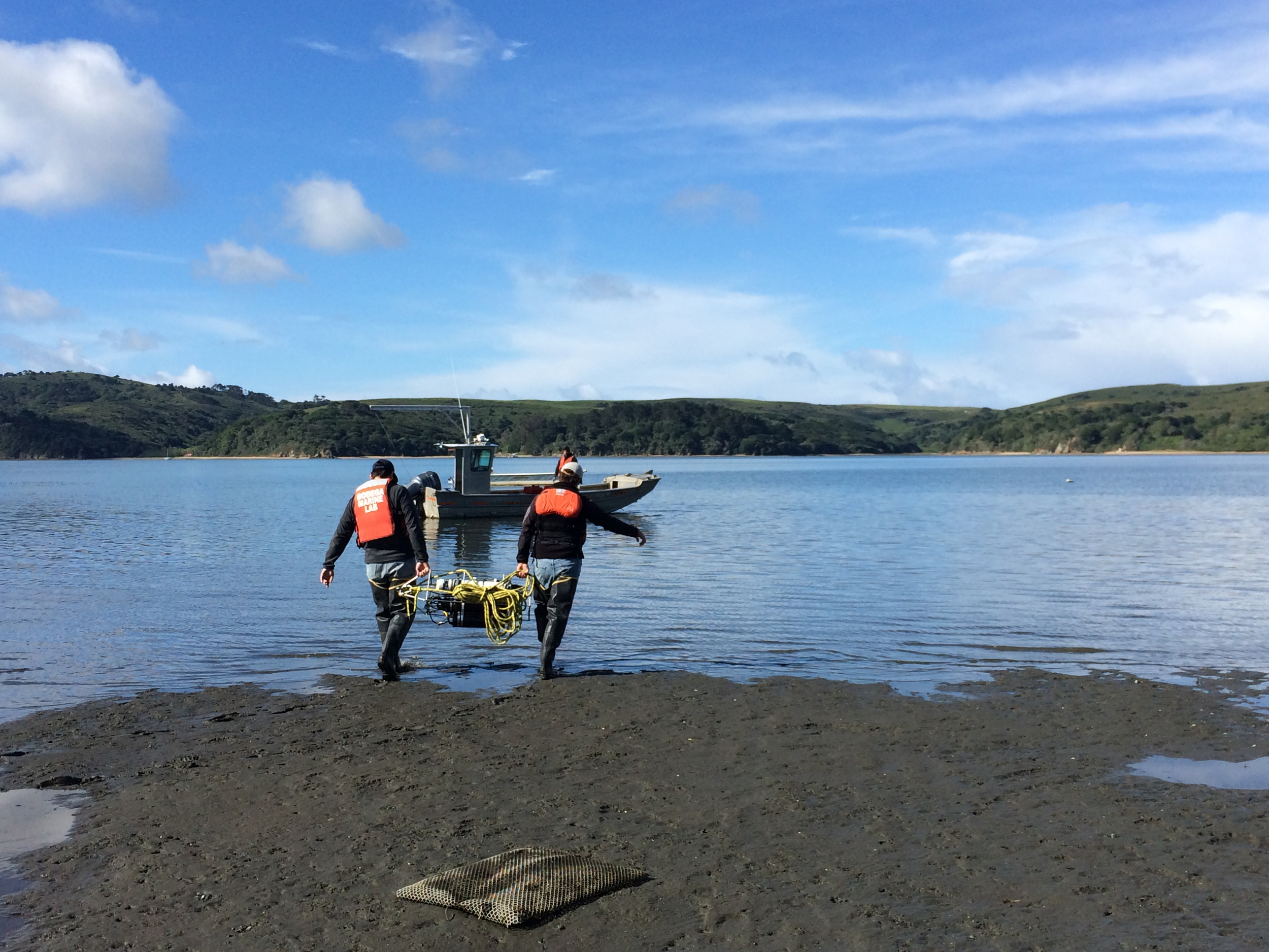 Deploying instruments at Hog Island Oyster Co.