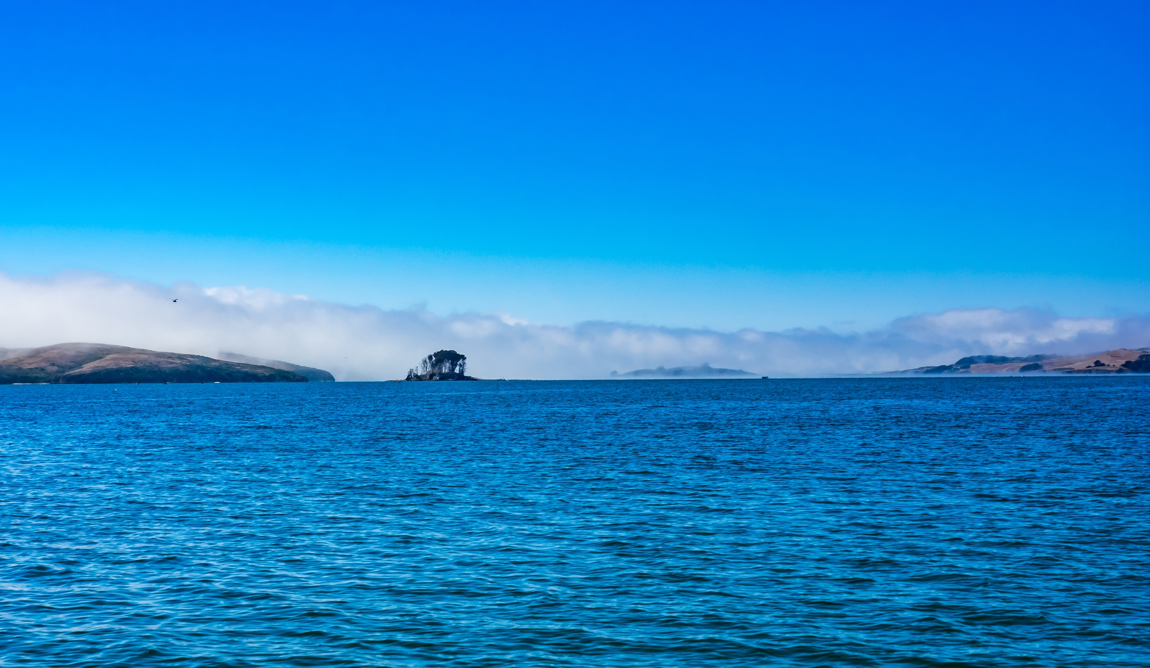 Another sunny day on the water in Tomales Bay, CA. Photo by Aaron Ninokawa