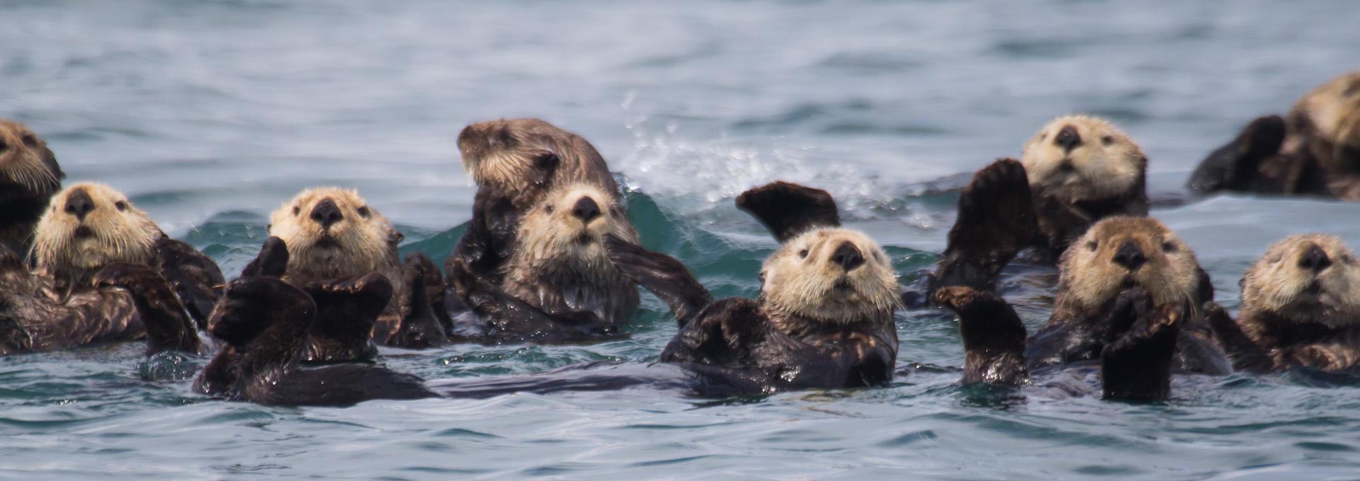 Image: https://www.nps.gov/glba/blogs/otters-on-ice.htm