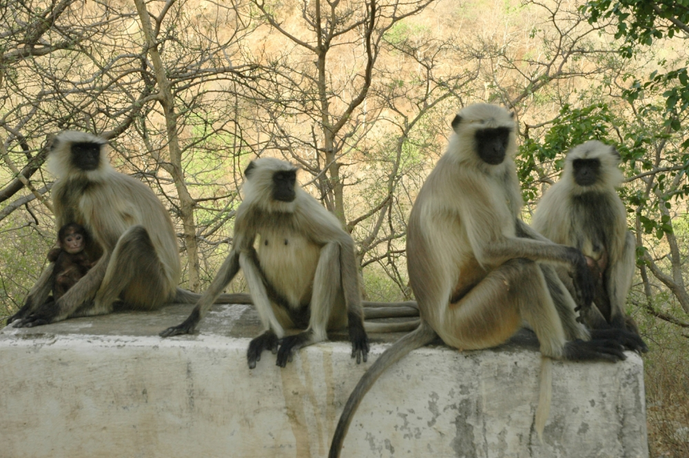 Cue  4 monkeys.jpg