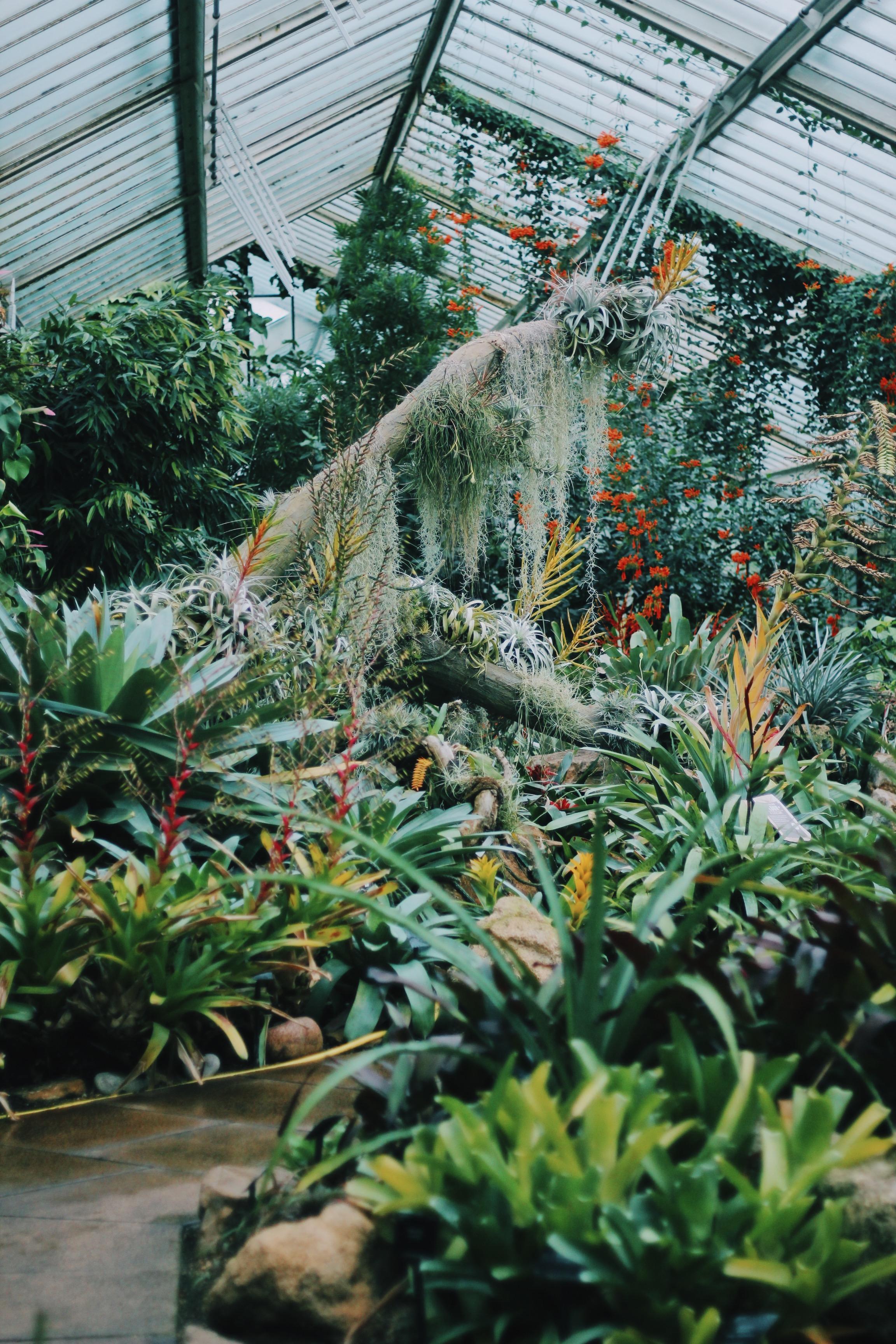 My Favorite Temperature Zone. Tropical Rainforest :)