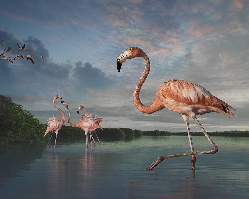 flamingos at rio lagartos ©2017