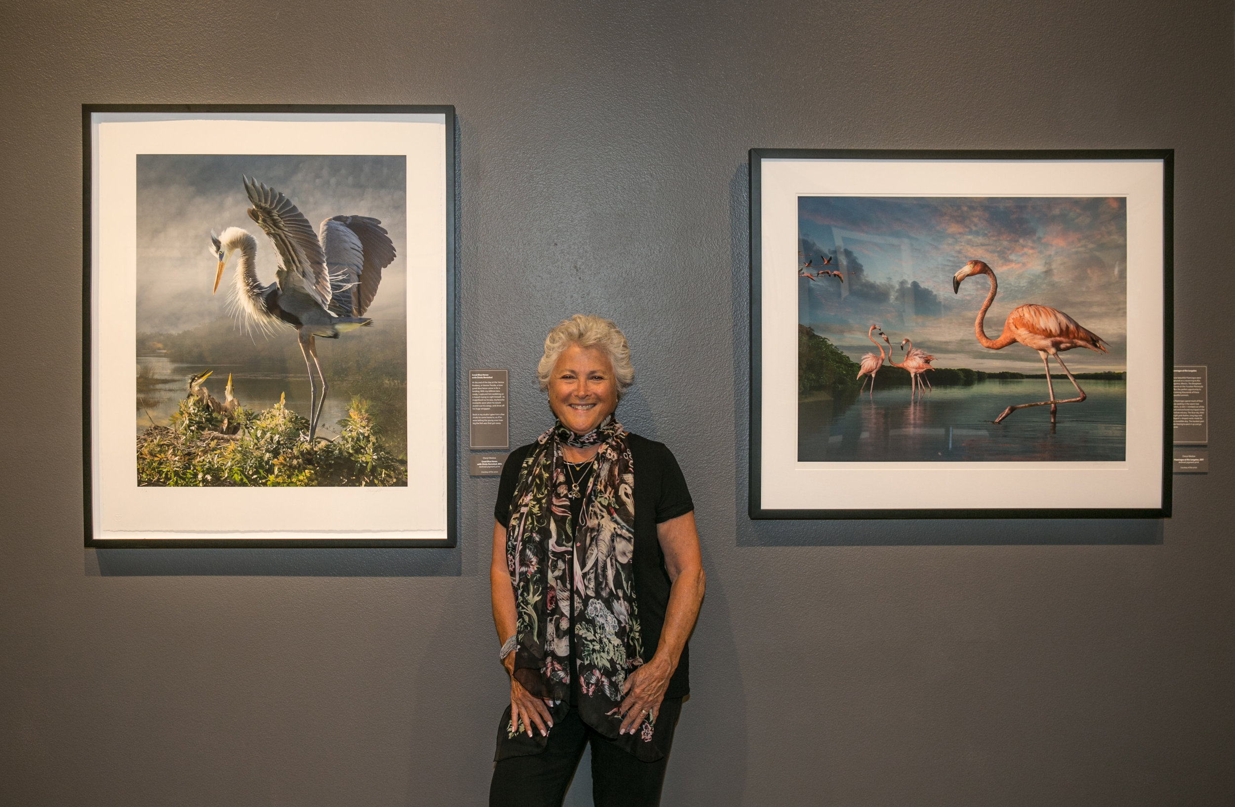 Artist in front of  Great Blue Heron With Chicks Revisted  and  Flamingos At Rio Lagartos . Photo by George Rose