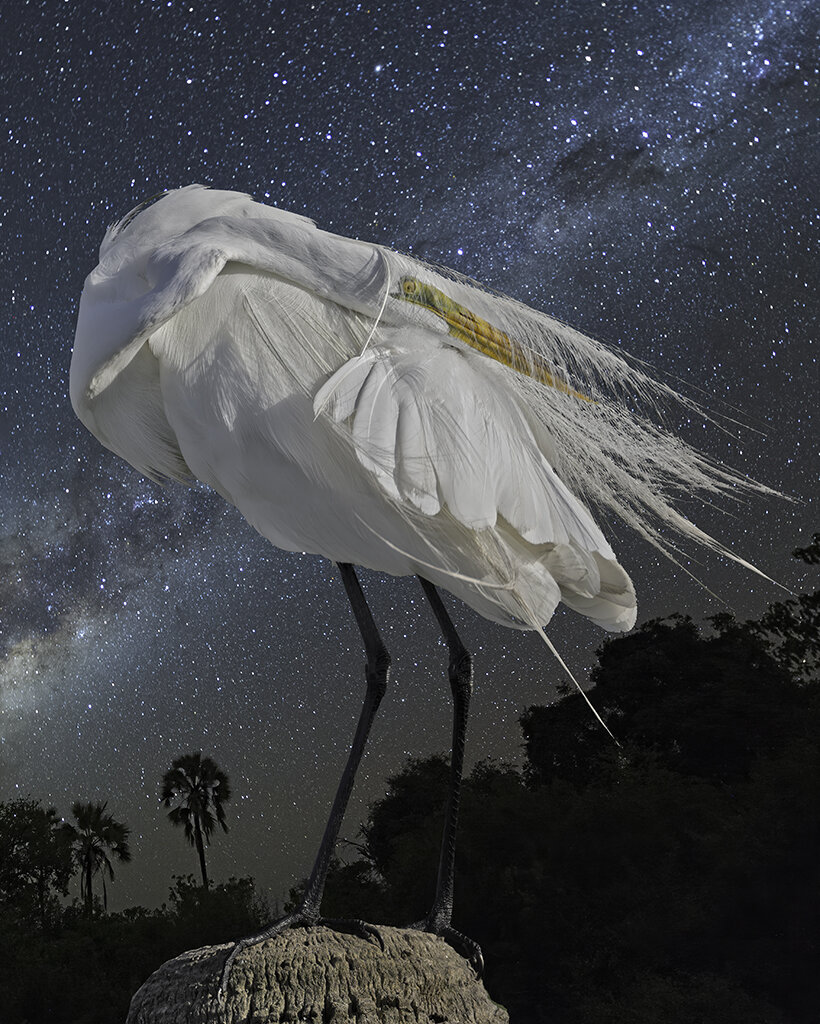 great egret and the milky way  ©2019