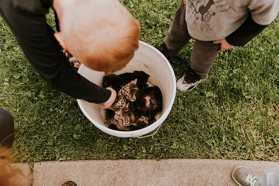 kittens in a bucket