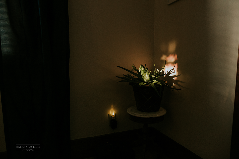 The last little drop of sunlight in our house lights up the aloe.