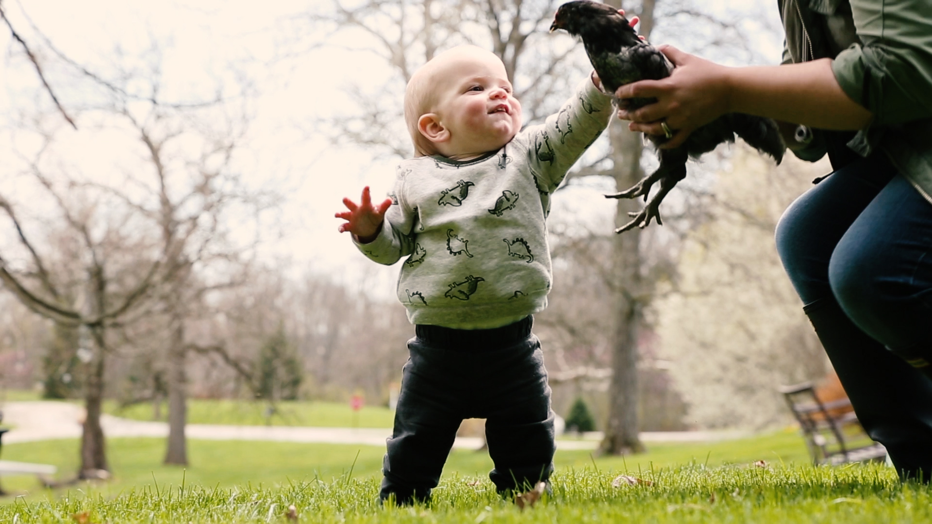 toddler petting chicken