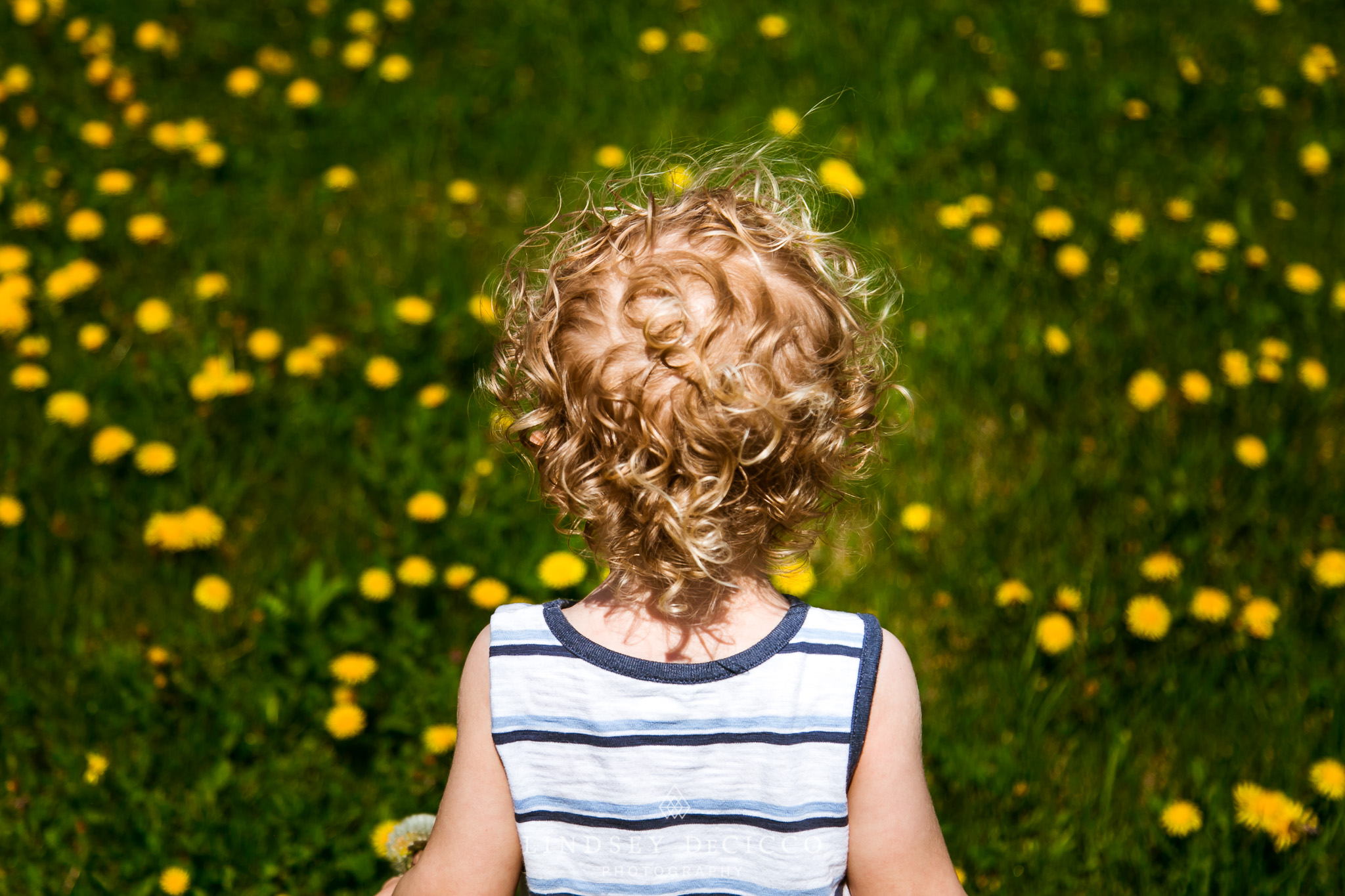 blonde curly haired toddler in dandelion field