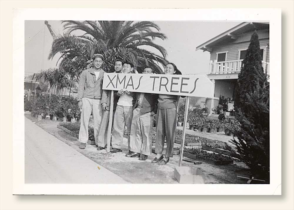 Xmas Trees For Sale c. 1946. L-R: Uncles Mike, Joe, Bob and Gus, with close friend from Hawaii Judy Teruya. (Click to enlarge.)