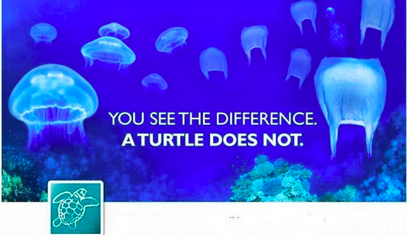 Do you see the difference? Did you know some Sea Turtles eat jellyFish?   PLEASE  . if you have to take a plastic bag (or any plastic) onto the beach, or onto a boat on the Ocean, remember to take it back. you might prevent a needless death. Better yet, skip unnecessary plastics at the grocery store, restaurants and in life. Source: SharetheBeach