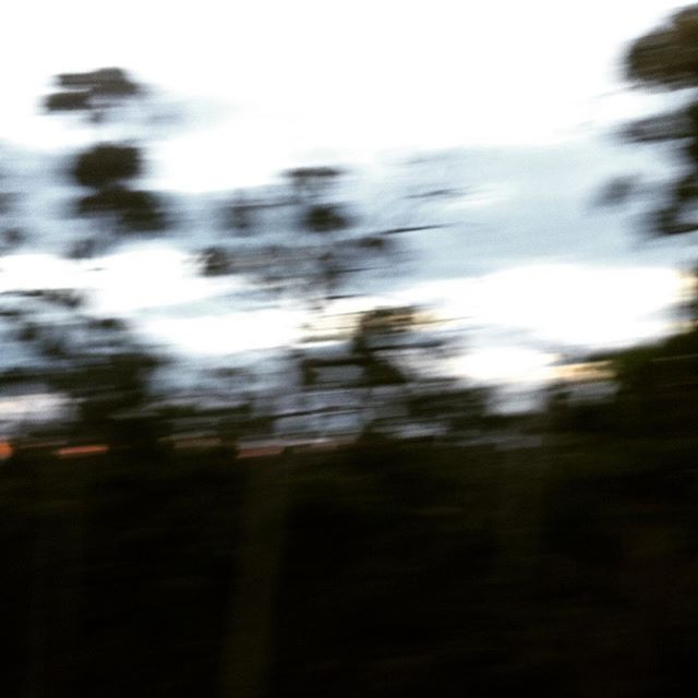 Dancing trees. #trees #nature #evening #hobartandbeyond #place #discover #tasmaniagram #tailoredtasmania #discovertasmania #sarahwoodphotography